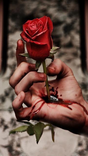 Rose__1_
